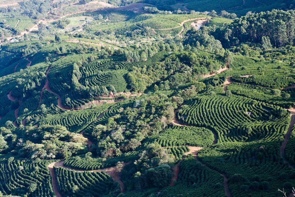 Landschaftsaufnahme von Kaffeefeldern auf der Fazendas Dutra. Grüne Felder werden von verschlungenen Wegen durchzogen.